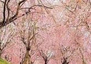 明日は【春分の日】