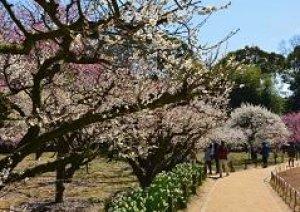 今日春の陽気