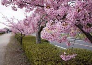 今日西日本は【春の嵐】
